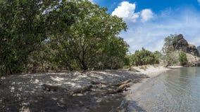 Dragones de Komodo en una playa Imágenes de archivo libres de regalías