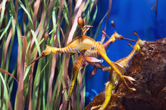 Dragones del mar foto de archivo libre de regalías