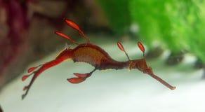 Dragones del mar Foto de archivo
