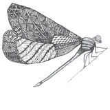 Dragonflie. Hand drawn graphic illustration in black and white and gray colors. Doodle image. Stock Images