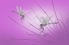 Dragonflies на траве Стоковая Фотография