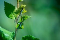 Dragonflies на траве Стоковое фото RF