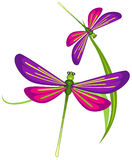 Dragonflies royalty free illustration