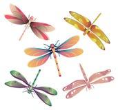 Dragonflies. Vector illustration of five dragonflies Stock Image