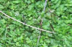 3 dragonflies Стоковое Фото