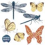 Dragonflies and butterflies set. Hand drawn dragonflies and butterflies set vector illustration