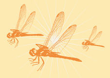 Dragonflies in flight (vector) Stock Photography
