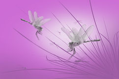 Dragonflies on the grass Stock Photography