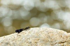 Dragonflies, insekty, zwierzęta, natura, makro- obrazy royalty free