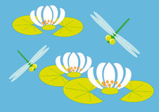 Dragonflies and lily. Green dragonfly flying over the flowers of water lilies Royalty Free Stock Photo