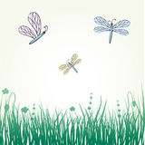 Dragonflies on the meadow Royalty Free Stock Photo