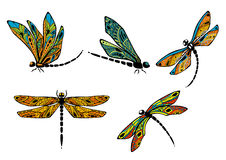 Dragonflies with ornamental openwork wings Royalty Free Stock Photography