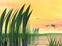 Dragonflies upon pond Stock Photo