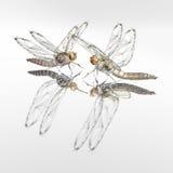 Dragonflies - robots Stock Images