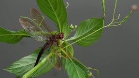 Dragonfly Брайна на заводе dragonfly большой видеоматериал