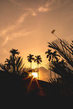 Dragonfly держа дальше ветвь дерева с заходом солнца Стоковая Фотография