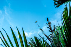 Dragonfly держа дальше зеленое разрешение Стоковая Фотография RF