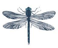Dragonfly нарисованный рукой Стоковые Фото