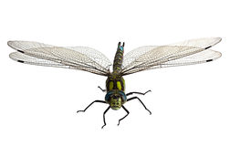Dragonfly на белизне Стоковая Фотография