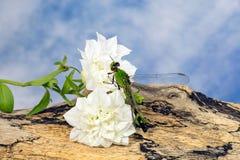 Dragonfly на белом цветке Стоковое фото RF