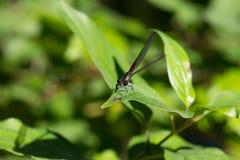 Dragonfly на листьях Стоковые Фото
