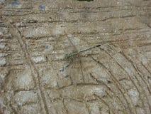 Dragonfly на конкретном поле Стоковое Фото