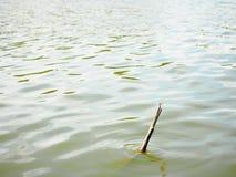 Dragonfly на старой сломанной ручке в реке Стоковые Фото