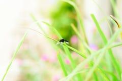 Dragonfly на траве стоковая фотография rf