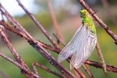 Dragonfly на луге Стоковые Изображения