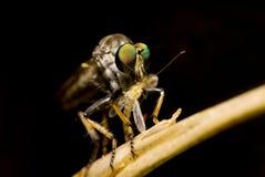 dragonfly предпосылки черный Стоковая Фотография RF