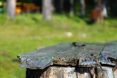Dragonfly сидит на деревянной скамье на заднем плане деревьев Стоковое Фото