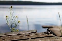 Dragonfly сидит на деревянных досках на предпосылке озера Стоковые Фото