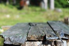 Dragonfly сидит на досках на предпосылке деревьев Стоковая Фотография