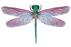 Dragonfly с розовыми крыльями на белой предпосылке иллюстрация вектора