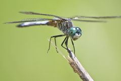 Free Dragonfly Royalty Free Stock Image - 10052686