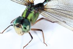 Dragonfly. Close-up royalty free stock photos