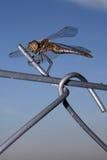Dragonfly Stock Photo