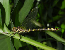 Dragonfly Stock Photo