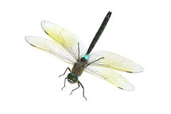 Free Dragonfly Stock Images - 14449044