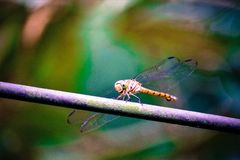 There is a dragonfly on the branch royalty free stock photo