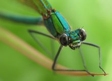 Free Dragonfly Stock Photos - 14620193