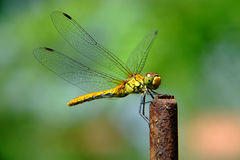 DragonFly. A dragonfly resting and enjoying the sun on a steel rod Stock Image