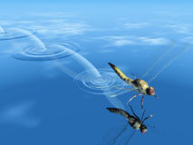 The dragonfly. Dragonfly  jump on the water Stock Photos