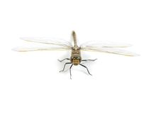 DragonFly Royalty Free Stock Image