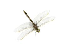 DragonFly. A close up shot of a dragon fly on white royalty free stock photos