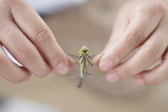Dragonfly. In my hand just wanna take a photo royalty free stock photos