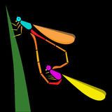 Dragonfly. Two colorful dragonfly perched on a leaf Stock Photos
