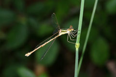 Dragonfly. On the grass Stock Photo