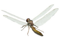 Dragonfly. Computer image, dragonfly 3D isolated white background Stock Image