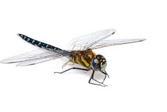 Free Dragonfly Stock Image - 3159121